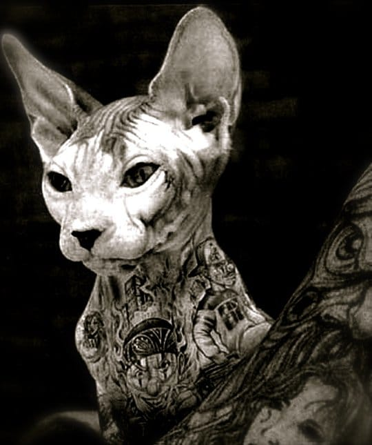 Tattooing Animals: Abusive or Artistic?