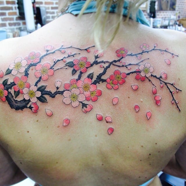 An elegant, simple, traditional Cherry Blossom branch