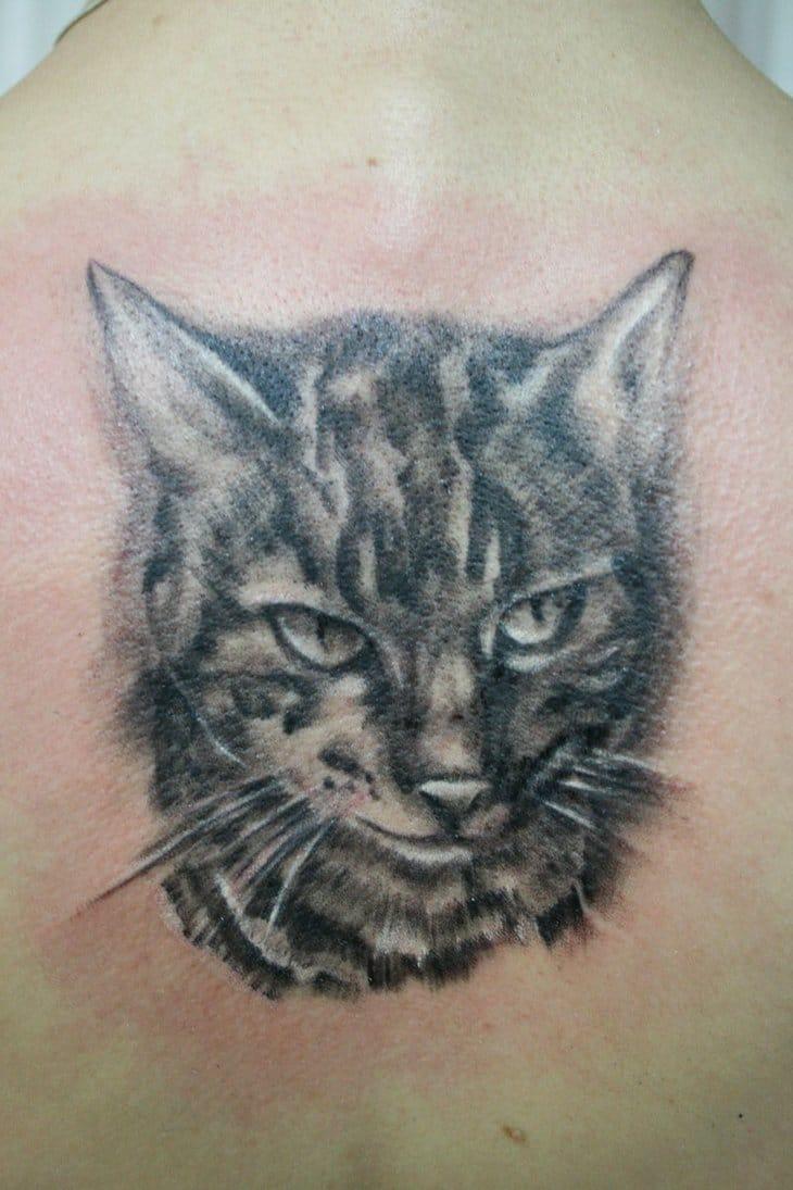 Gatos são gatos sempre! Chattreusebb