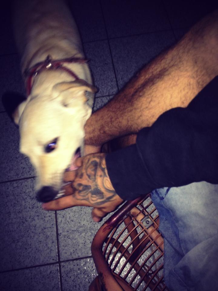 Cadela que foi dopada para ser tatuada