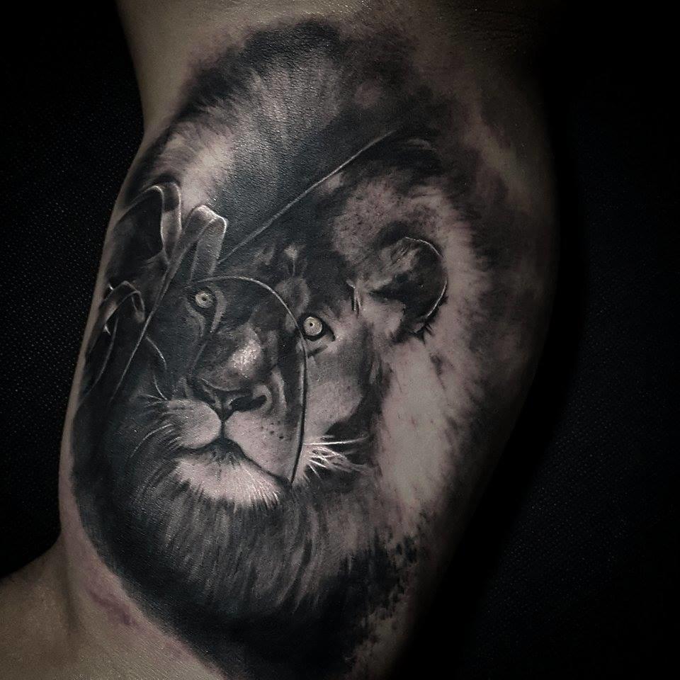 Lindo leão de Tony Gomes