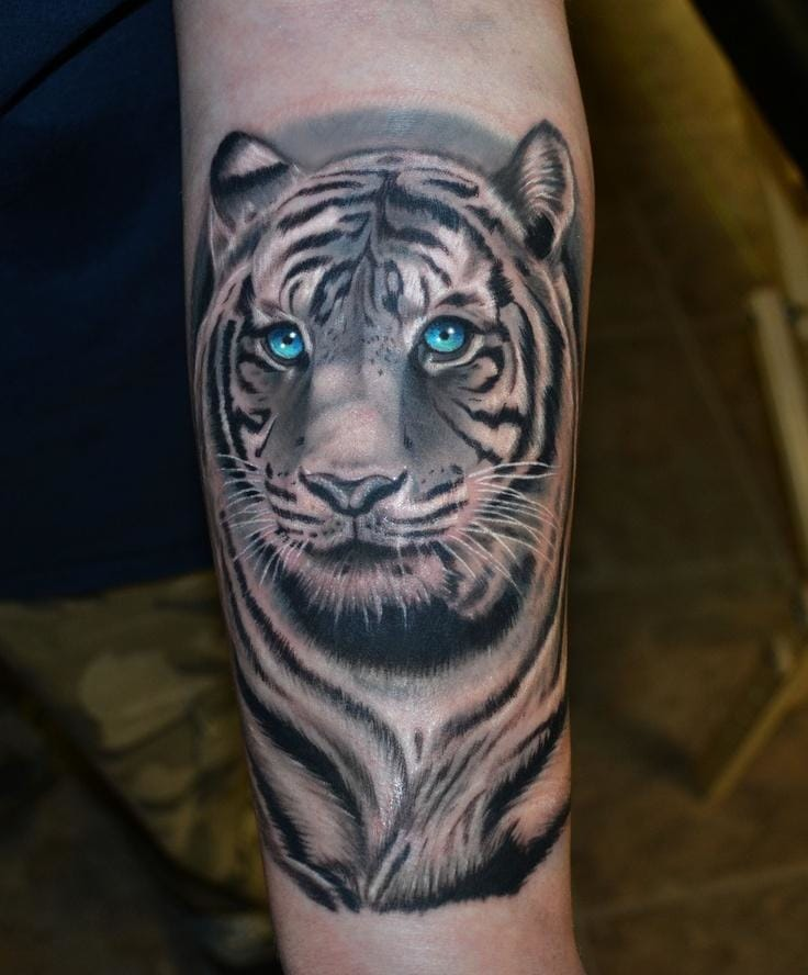 Blueeyed white tiger by Jesse Pinette