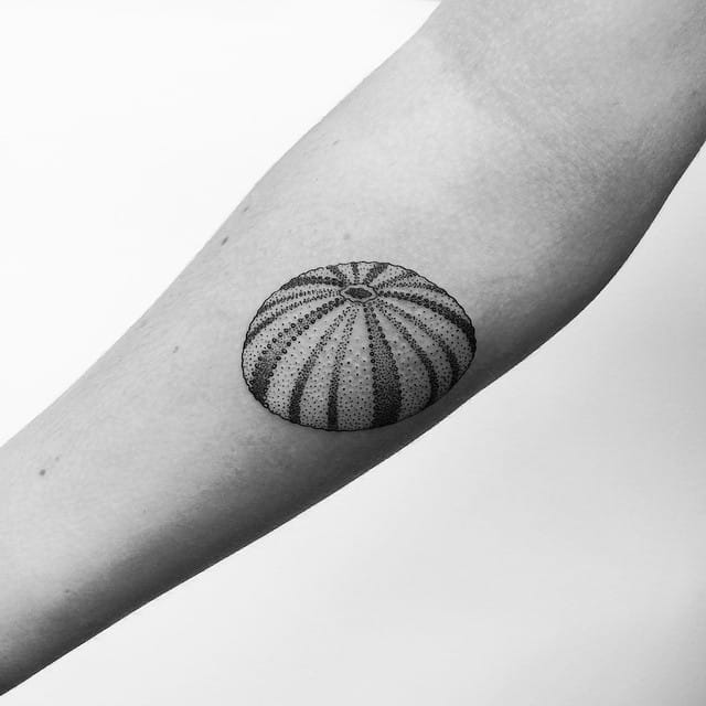 Lovely urchin by Toma Pegaz.