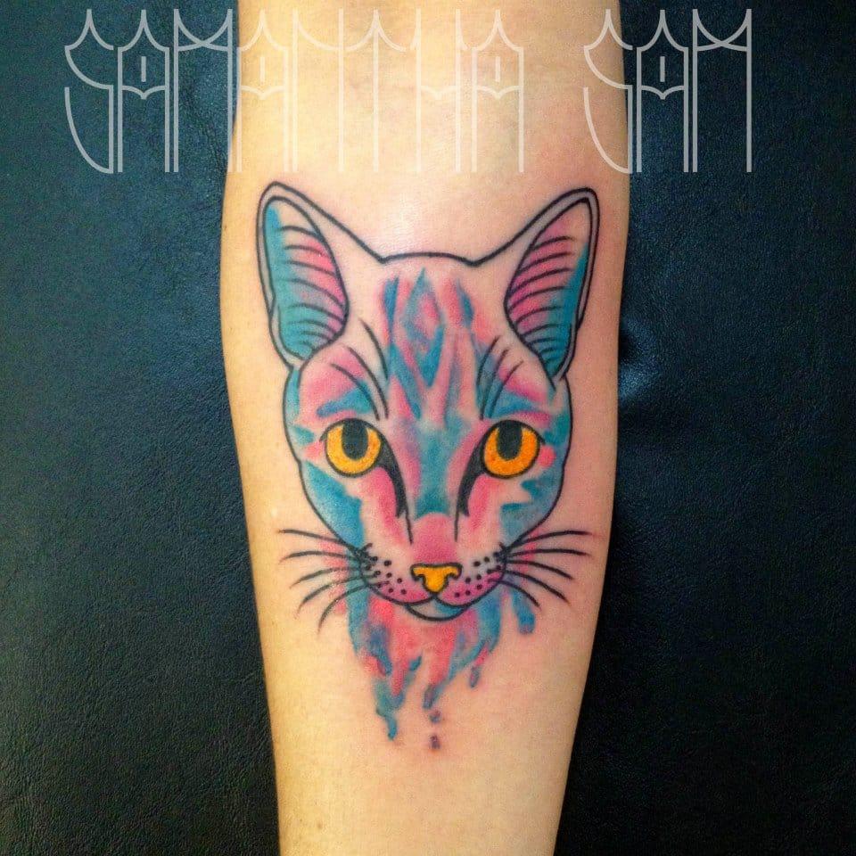 Lindo gato colorido