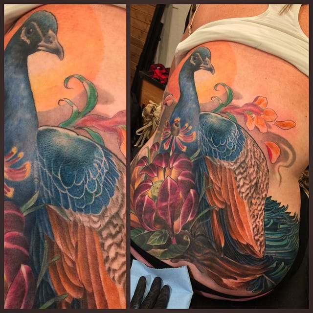 siege peacock