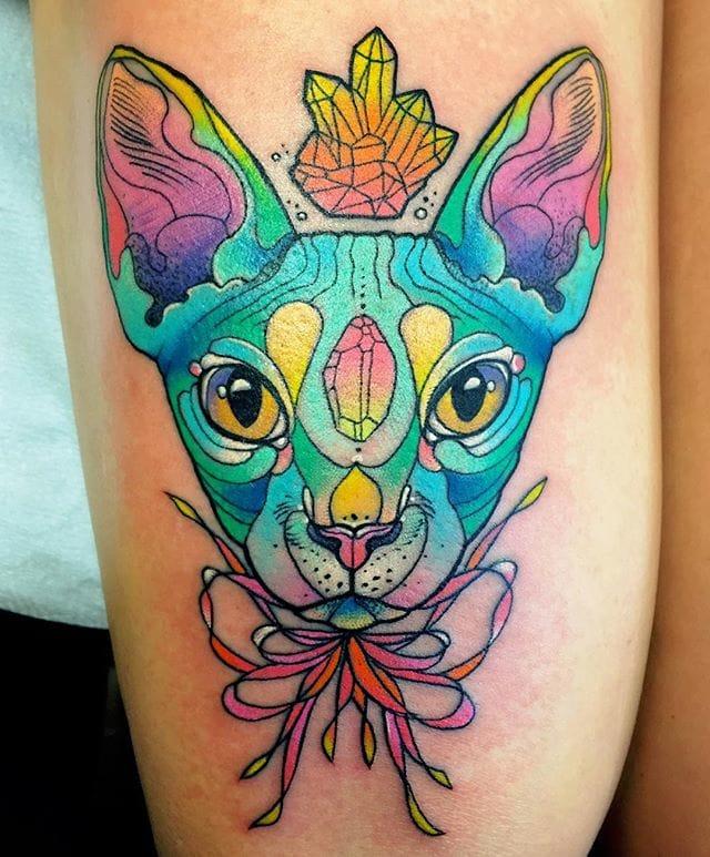 Blue Sphinx cat.