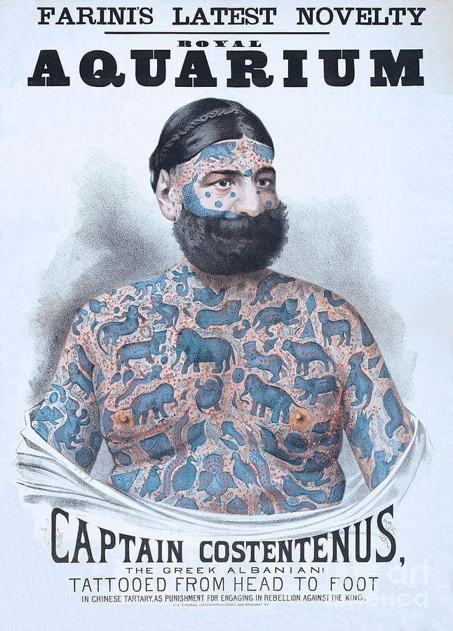 In America, Constentenus was exhibited by Great Farini and P. T. Barnum in the late 1800's