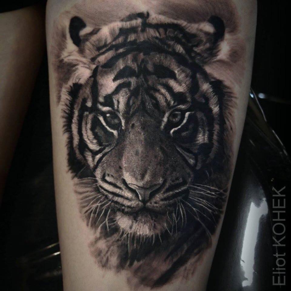 Beautiful tiger. By Eliot Kohek
