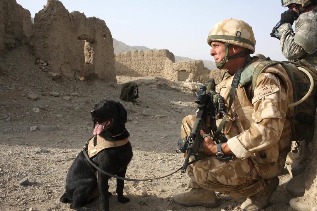 War Hero Pays Tribute To Bomb-Hunting Dog With A Tattoo!