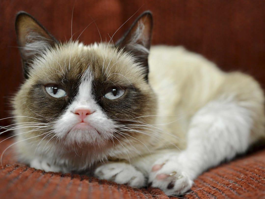 Tardar Sauce aka Grumpy Cat